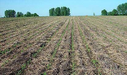 Schutz vor bodenerosion in der landwirtschaft for Boden clothing deutschland